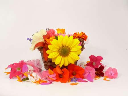 free plates: Flowermixture in the basket