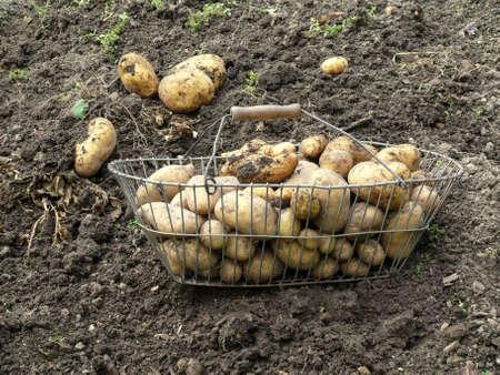 constitute: harvesting