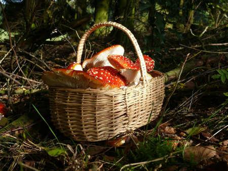 poisonous: poisonous mushrooms  Stock Photo