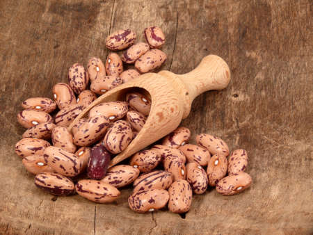 leguminosae: Garden beans