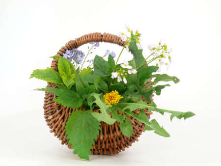 wild herbs photo