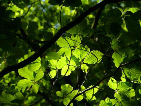 beech forest Stock fotó