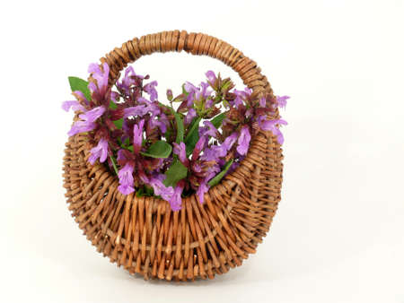 tannins: sage, leaves and flowers in the basket