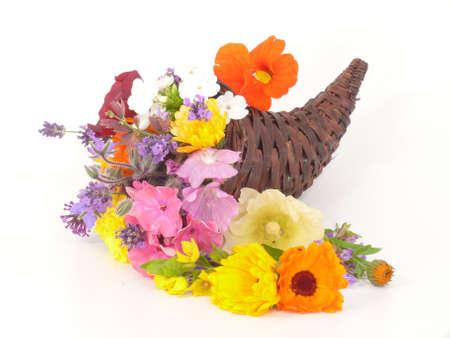 Flowers in Cornucopia photo