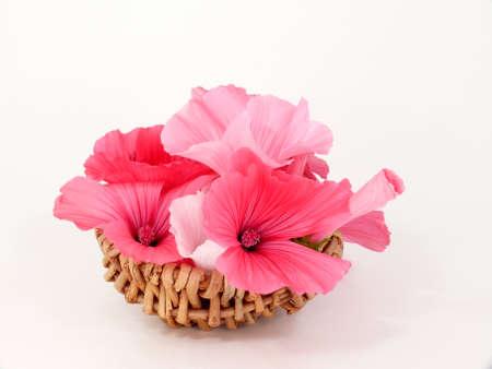 basketful: Basketful of Mallow