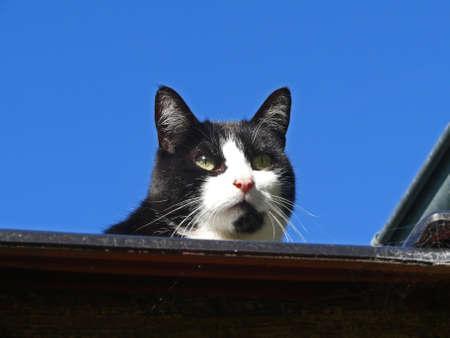 fritz the cat photo