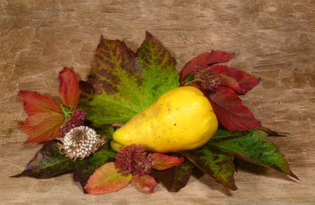 transient: autumnal arrangement