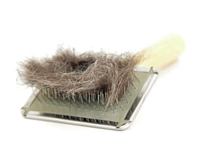 animal hair allergy release photo