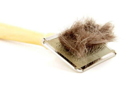 animal hair allergy release