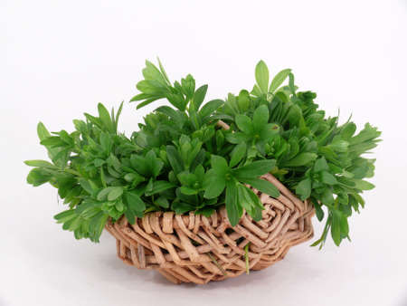 woodruff: young woodruff