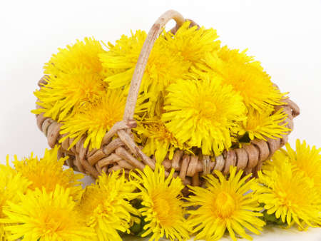 Dandelion flowers in a wicker basket photo