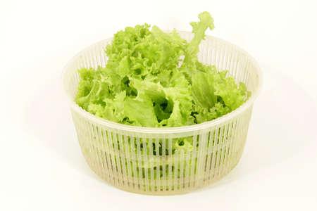 Oak leaf lettuce Standard-Bild