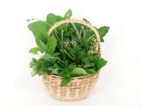 herbs wild: Hierbas silvestres en la cesta