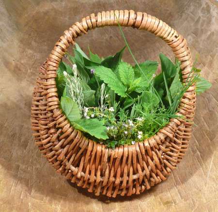 Wild herbs in basket Stock Photo - 14319780