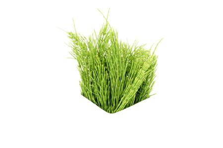 Herbal medicine Standard-Bild