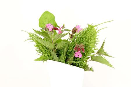 herbs wild: Hierbas silvestres