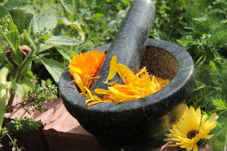 naturmedizin: Naturheilkunde Ringelblumen