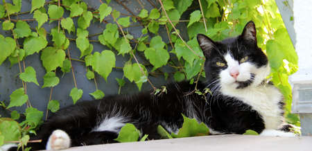 cat in the sun photo