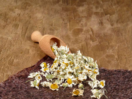 chamomile flowers photo