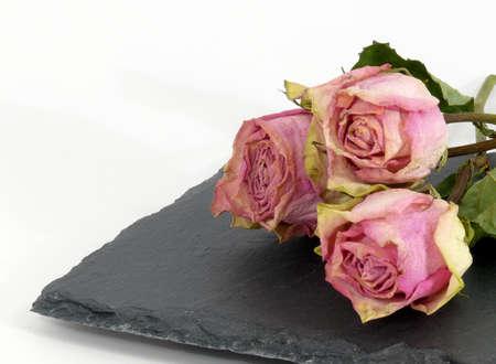 tristesse: roses