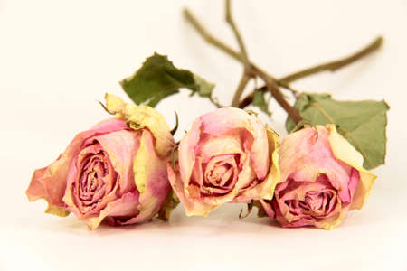 tristesse: rose bouquet Stock Photo