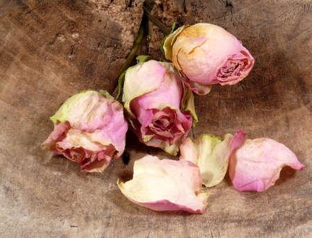 tristesse: nostalgia roses still-life