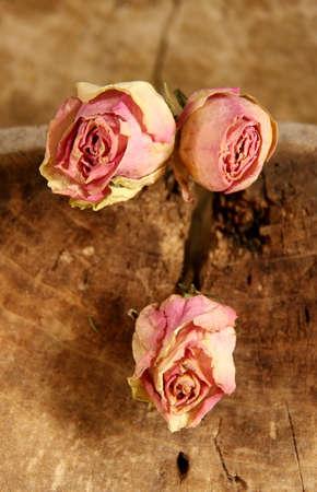 tristesse: nostalgia roses