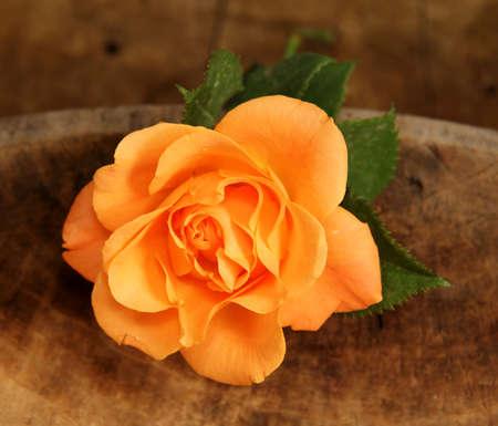 perishable: tea roses