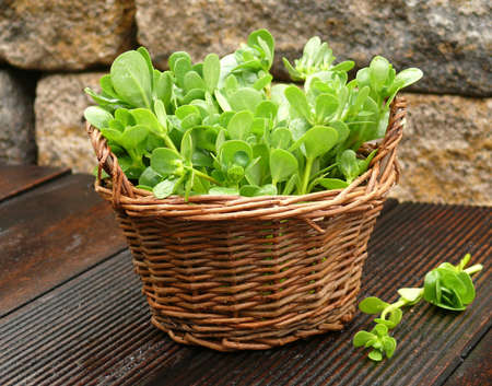 vegetables purslane