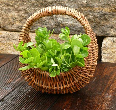 free plate: vegetables purslane