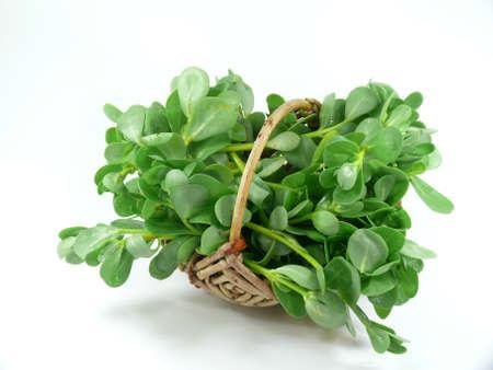 Gemüse Portulak Standard-Bild - 21756160