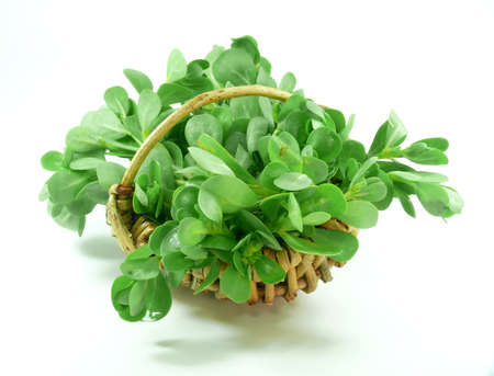 remedial: vegetables purslane