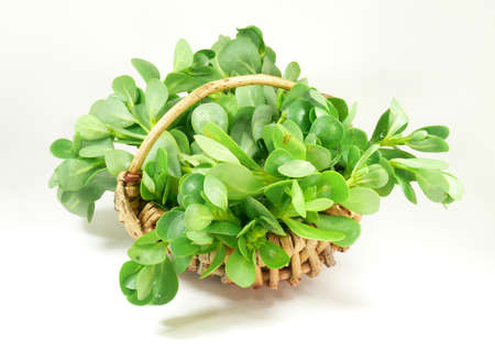 Gemüse Portulak Standard-Bild - 21766460