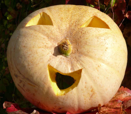 halloween k�rbis: Halloween K?rbis Lizenzfreie Bilder