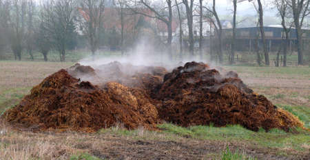 Piles of dung Stock Photo