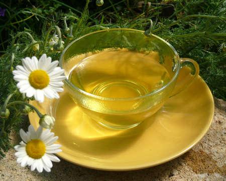 chamomile flower: Chamomile flower tea Stock Photo