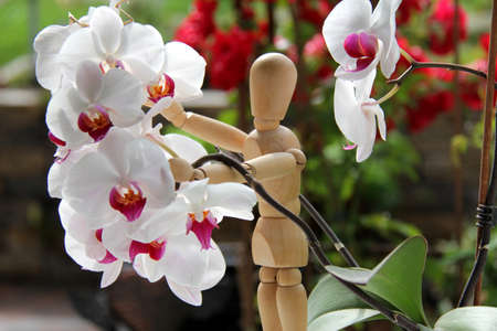 humanly: orchid plant and wood doll