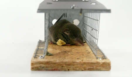 trap: Cage snap trap