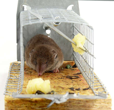 alive trapped mouse photo