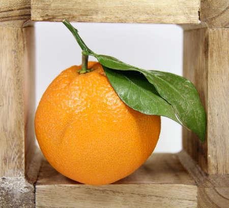 close p: leaf orange