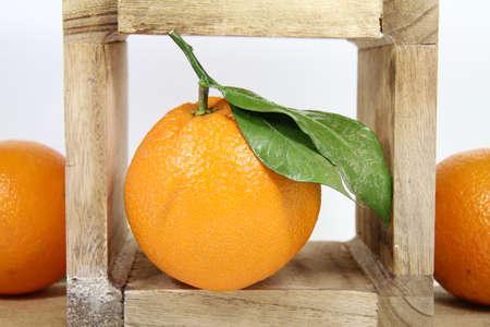 sine: leaf orange