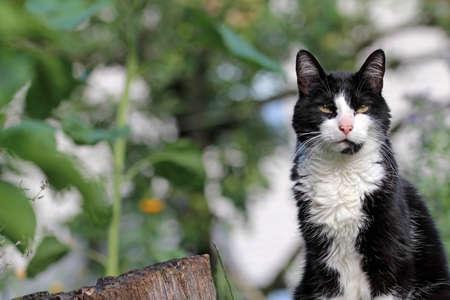 housecat: housecat on position Stock Photo