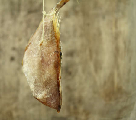 spurious: stockfish Stock Photo