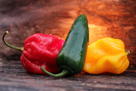chili peppers: hot chili peppers