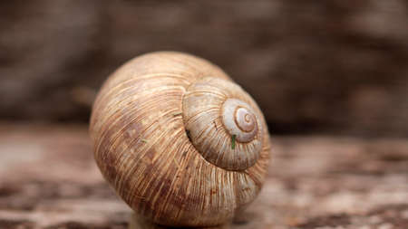 caving: housing snail