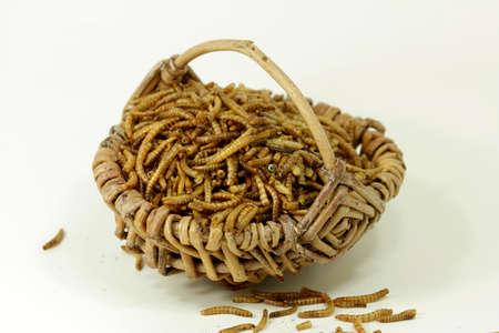 mealworms, protein source Standard-Bild