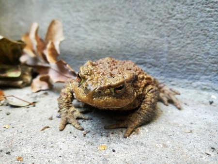 earth toad in the human hand Standard-Bild