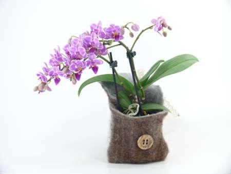 bouquet of Japanese dwarf orchids Standard-Bild