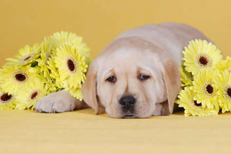 Puupy with yellow flowers