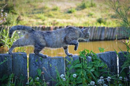 catlike: Cat lurking on fance